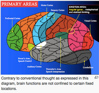 Primary Areas of The Brain